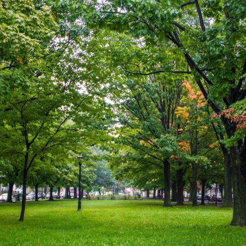 Renovación Parque Central Oriente